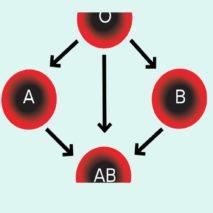 группа крови и резус